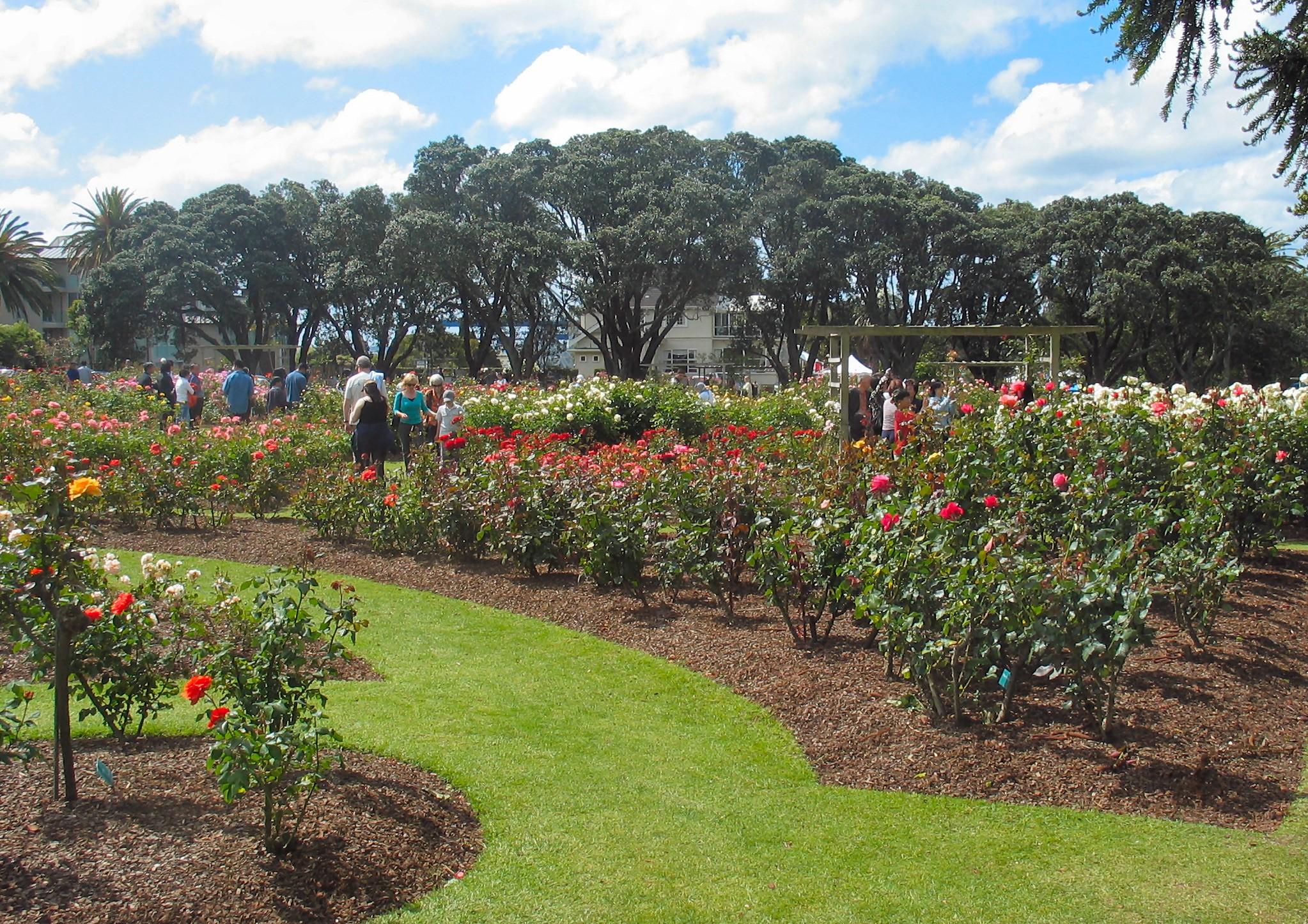 parnell-rose-gardens